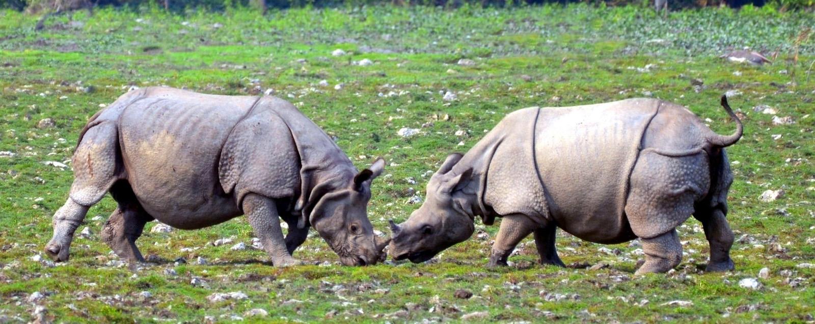 Dudhwa National Park Rhino